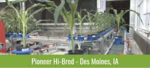 Plants on a Line - Pioneer Hi-Bred - Des Moines, IA