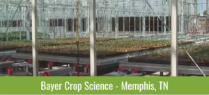Greenhouse - Bayer Crop Science - Memphis, TN